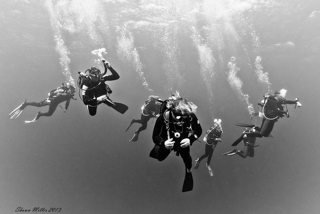 Yonaguni Dive team - 2013