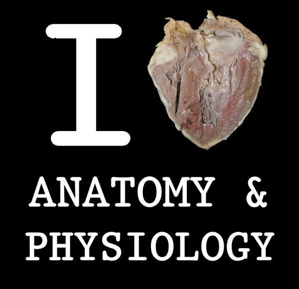 I Heart Anatomy and Physiology Sheeps heart to be
