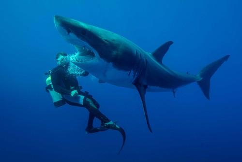 Le Requin Scarte Suite La Pousse Latrale Du Plongeur