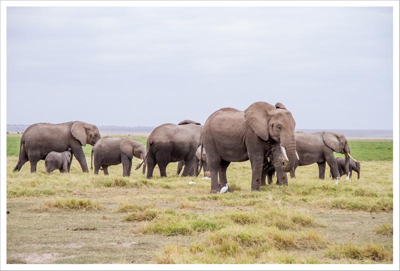 Amboseli-55