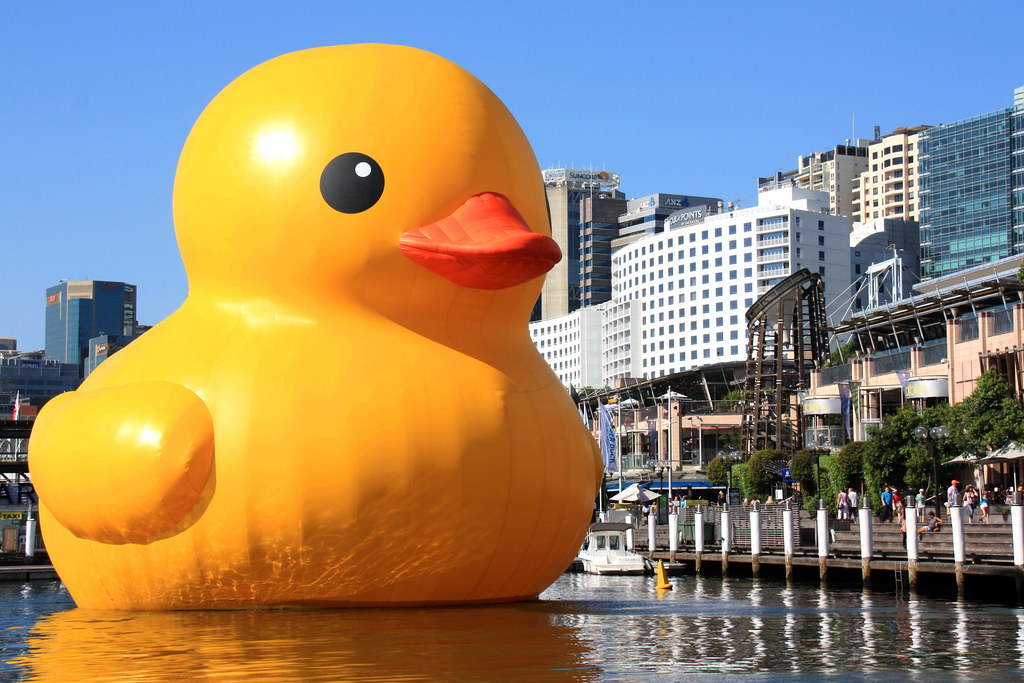 Giant Yellow Floating Duck Darling Harbour Turns Giant