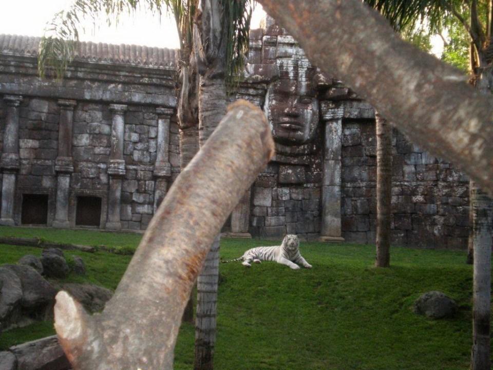 Tigre de Sumatra Zoo Bioparc Fuengirola Malaga 06