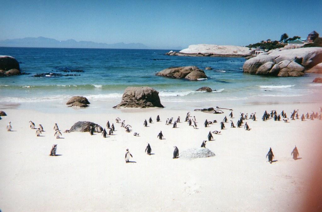 Ciudad del Cabo_Sudafrica (7)