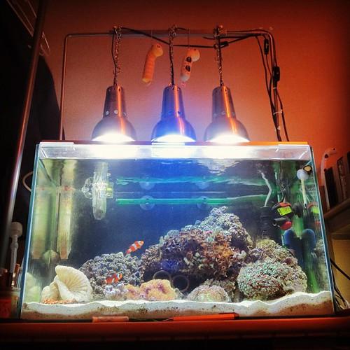 サンゴふえた水槽