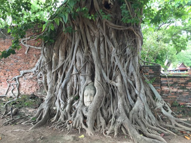 wat mahathat ayutthaya AlexExplorestheWorld