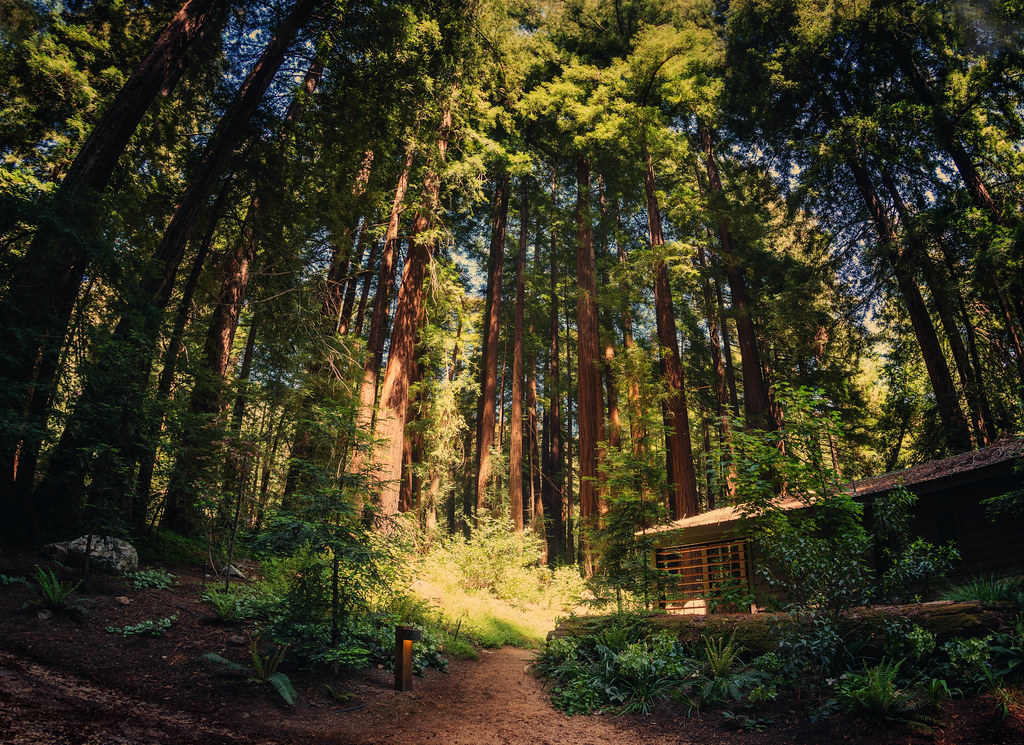 The Cabin In The Forest At The Glen Oaks Big Sur These