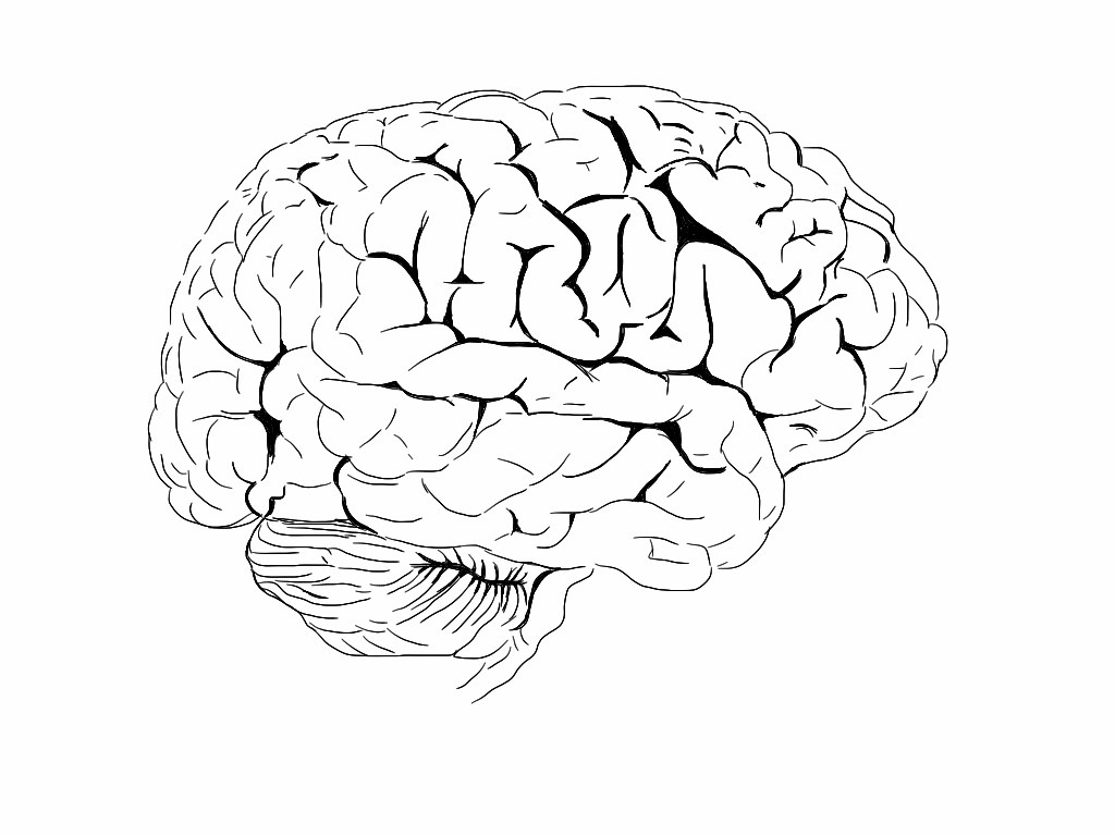 Brain Colouring Book For Those Of You Interested In