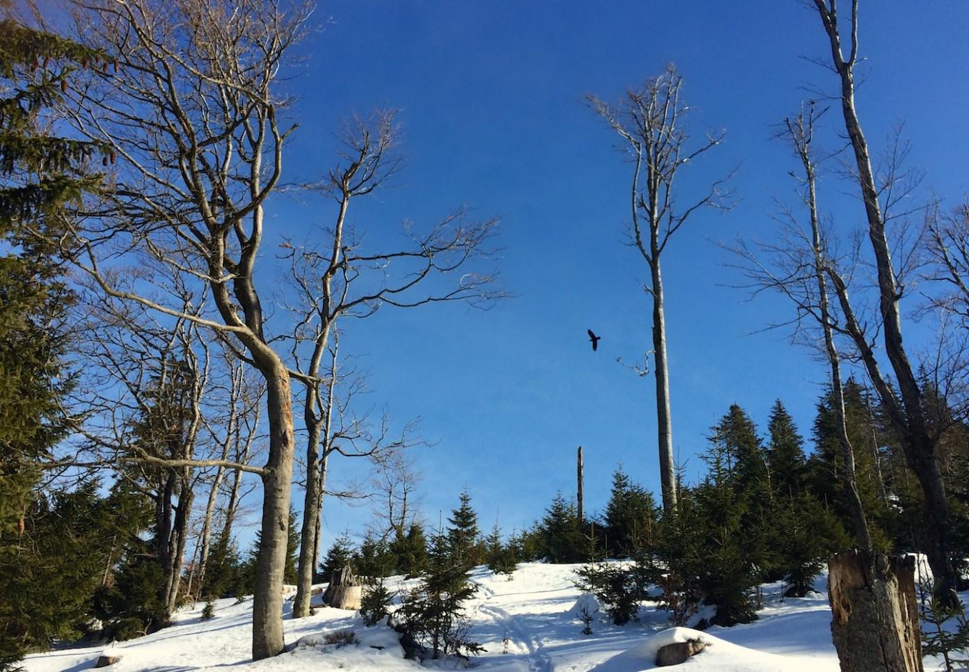 Hraničník, přechod mezi smíšeným lesem a monokulturou