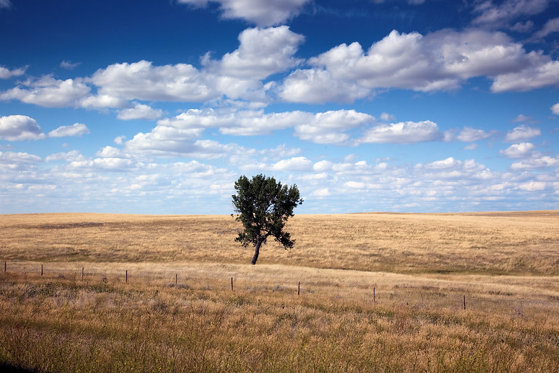 Highsmith, Carol M, photographer. Rural scene, South Dakota. 2009. Image. Retrieved from the Library of Congress; public domain
