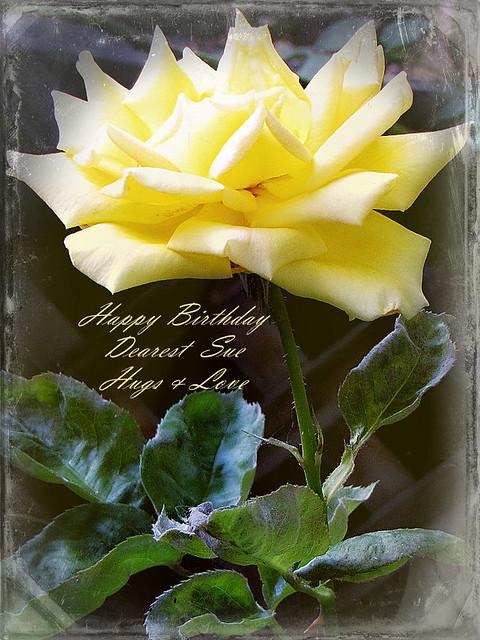 Happy Birthday Sue Flickr Photo Sharing