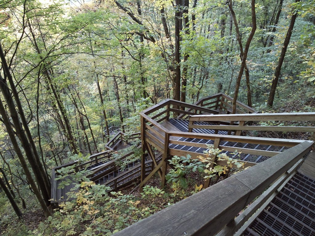 Image Result For Stairs In The Middle Of The Woods