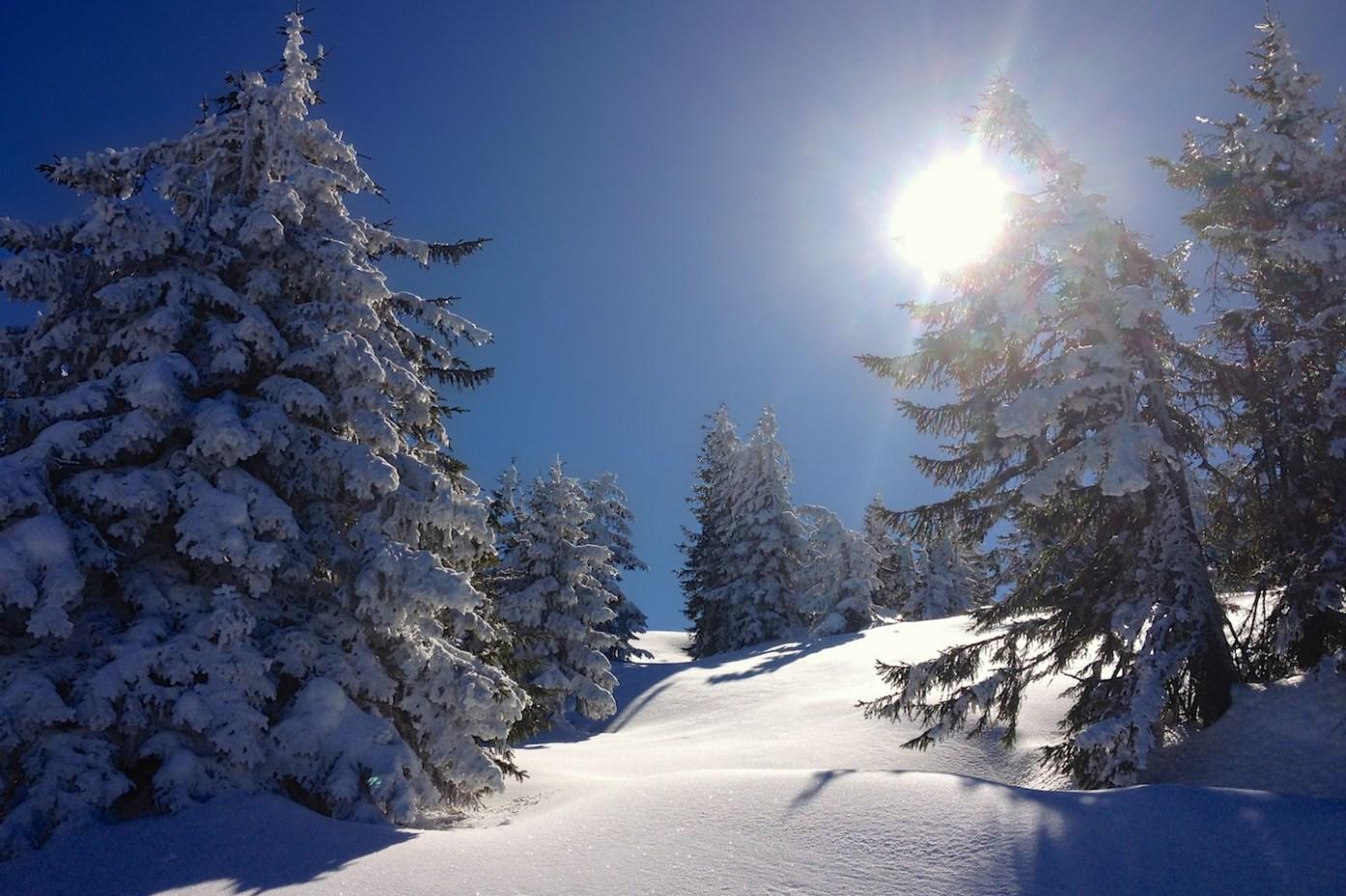 Na severních svazích nás vítá nefalšovaná zima v podobě čerstvě zasněžených stromů a závějí z prachového sněhu!