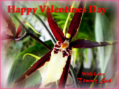 Happy Valentines Day Orchid My Orchids Are Blooming And
