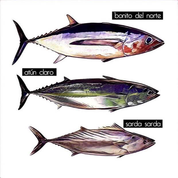 Diferencias entre atún, bonito y bonito del norte