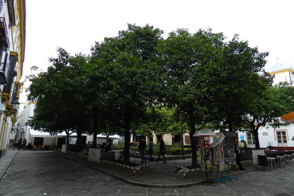 Plaza de Doña Elvira Barrio de Santa Cruz Sevilla 05