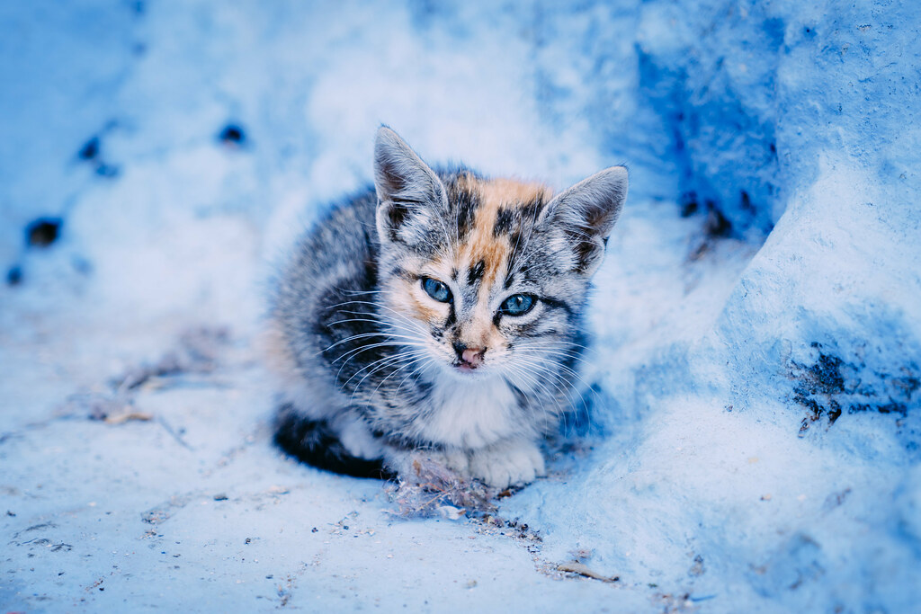 Chefchaouen Cat 4 All Together Now Awwwww A