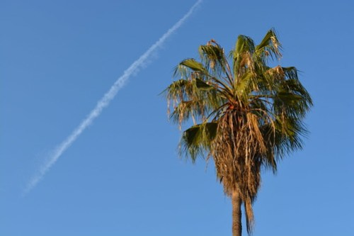 Palms in Culver City