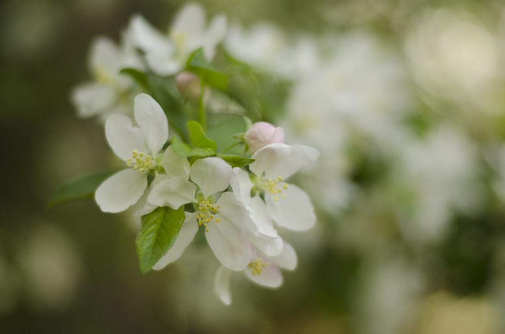 bud to blossom 5