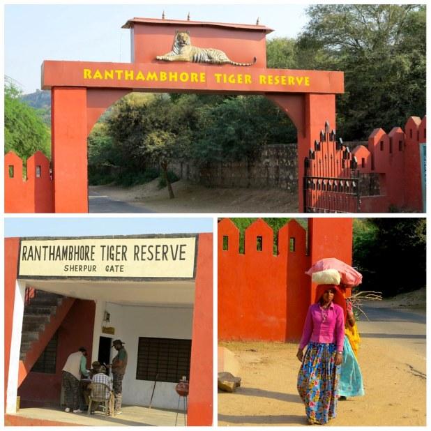 Tigres en India, Ranthambore