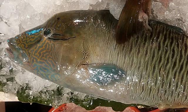 【永續海鱻食堂】珊瑚礁總動員:水清無魚 | 臺灣環境資訊協會-環境資訊中心