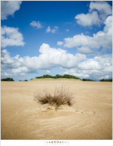 Minimale scherptediepte waardoor alle aandacht op de pol gras valt. De achtergrond is nog steeds aanwezig, maar minder dominant