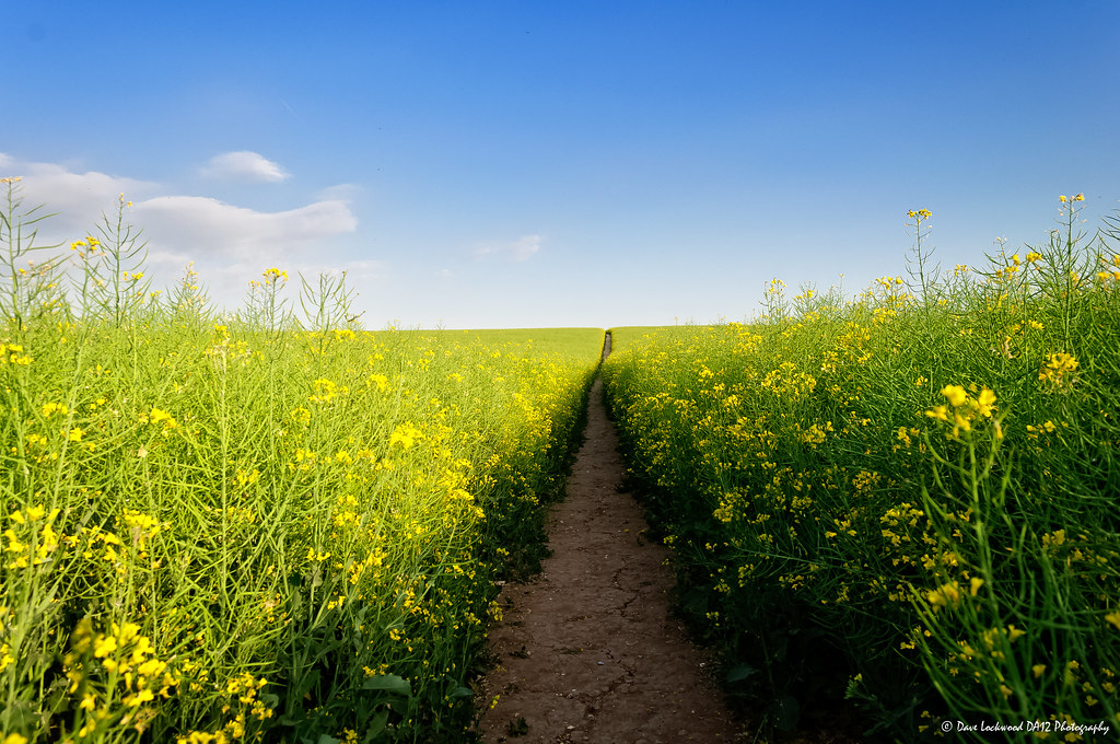Kentish Summer Pathway