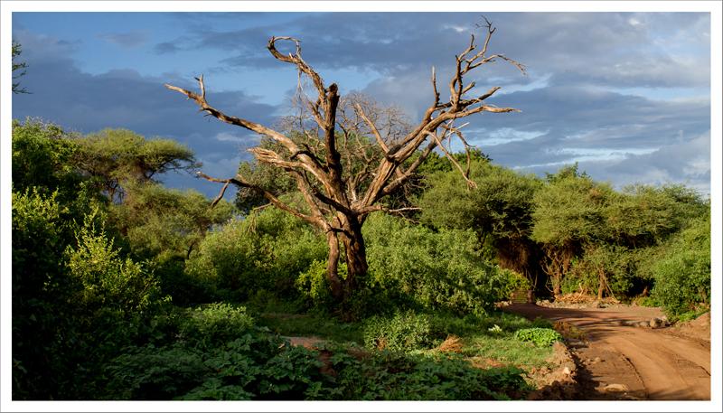 Tanzania-56