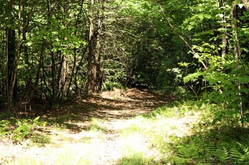 20150523_Camp_Creek_013