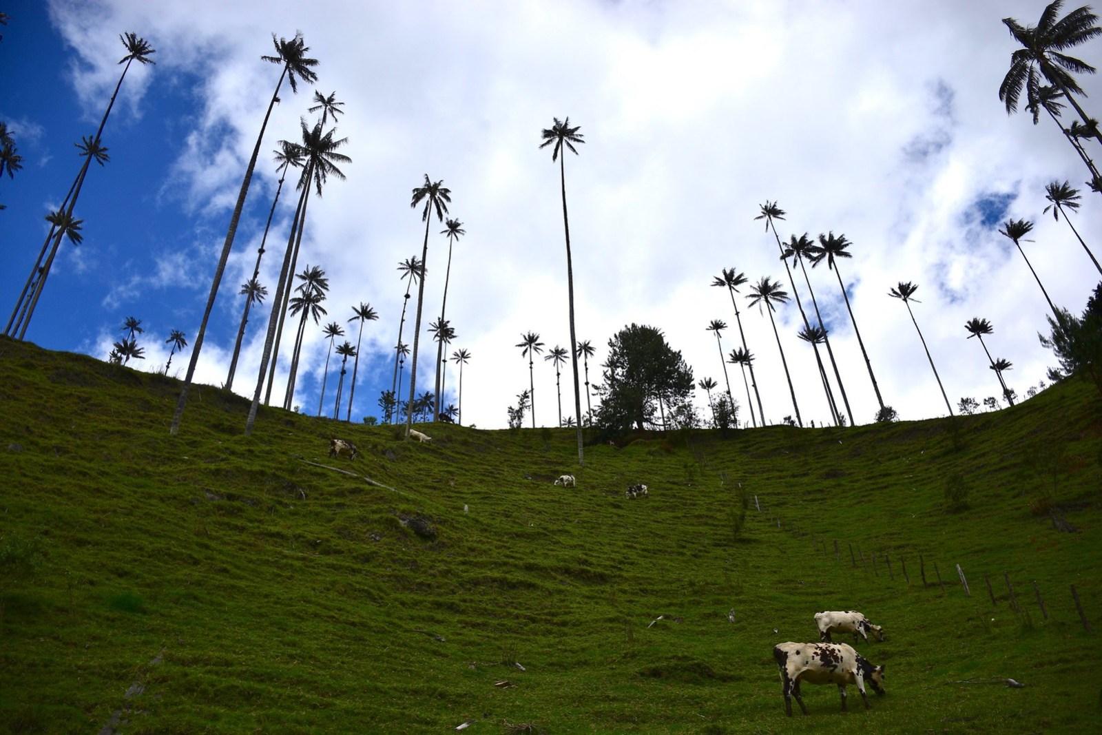 La Valle de Cocora