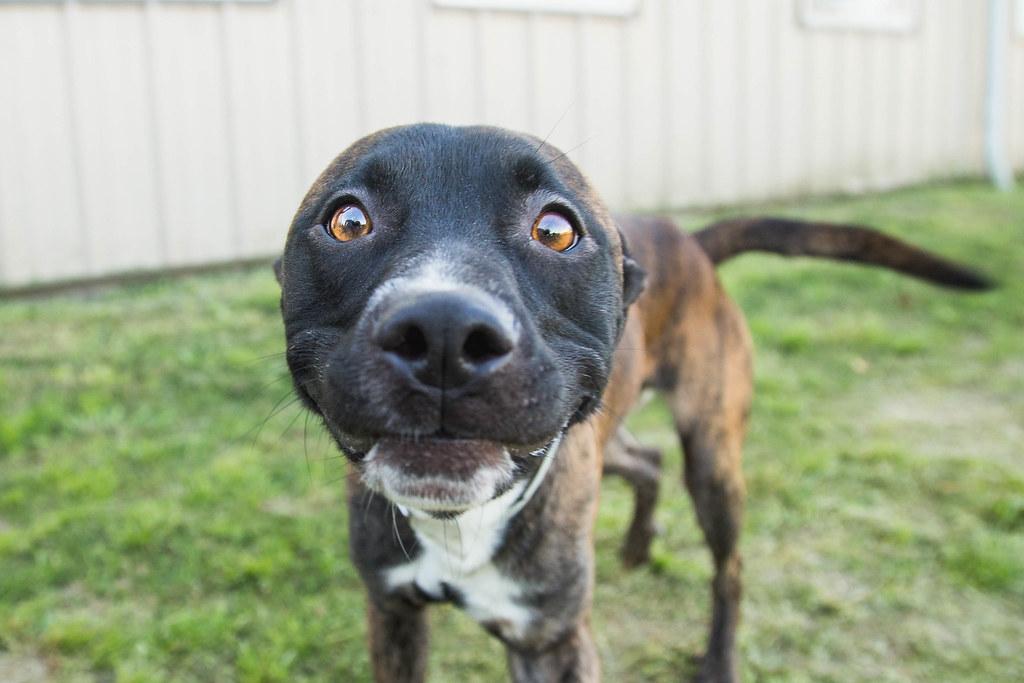 17256224282 e7ea60ef1a b Dog Names For Pitbulls Male