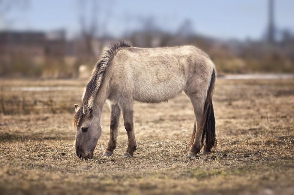 Horse 26.03.2012