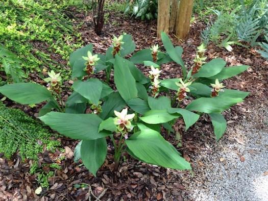 Gingerlily