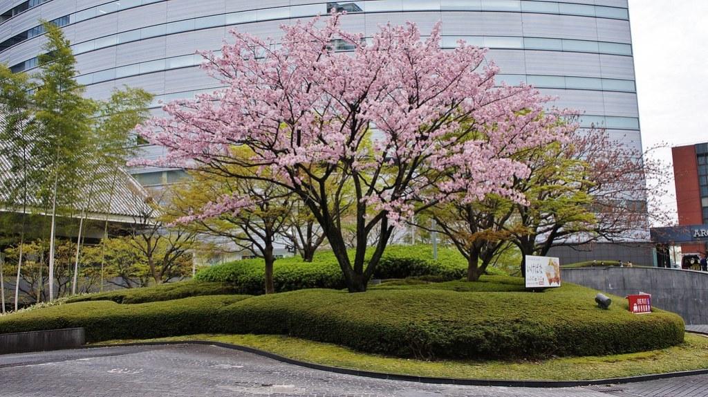 Sakura at Meguro Gajoen