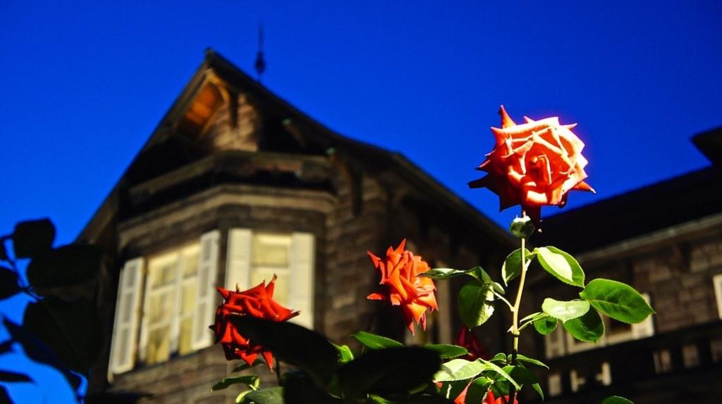Rose flowers at Kyu Furukawa Gardens.