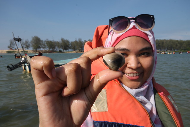 Clam Digging in Setiu, Terengganu