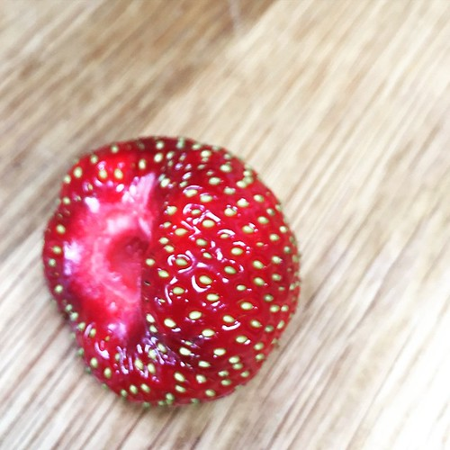 First strawberry from the garden - and it's a beauty!