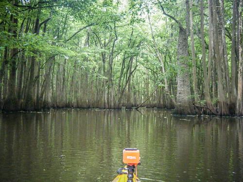 Sparkleberry Swamp-141