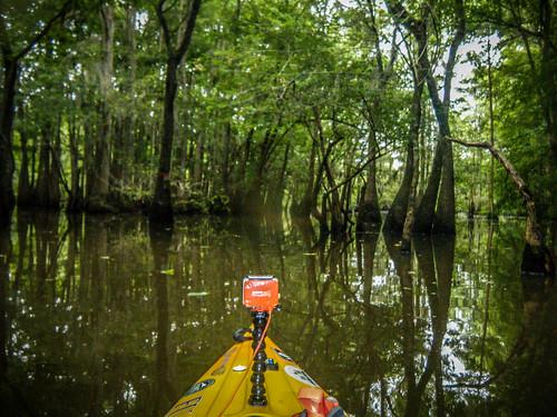 Sparkleberry Swamp-159