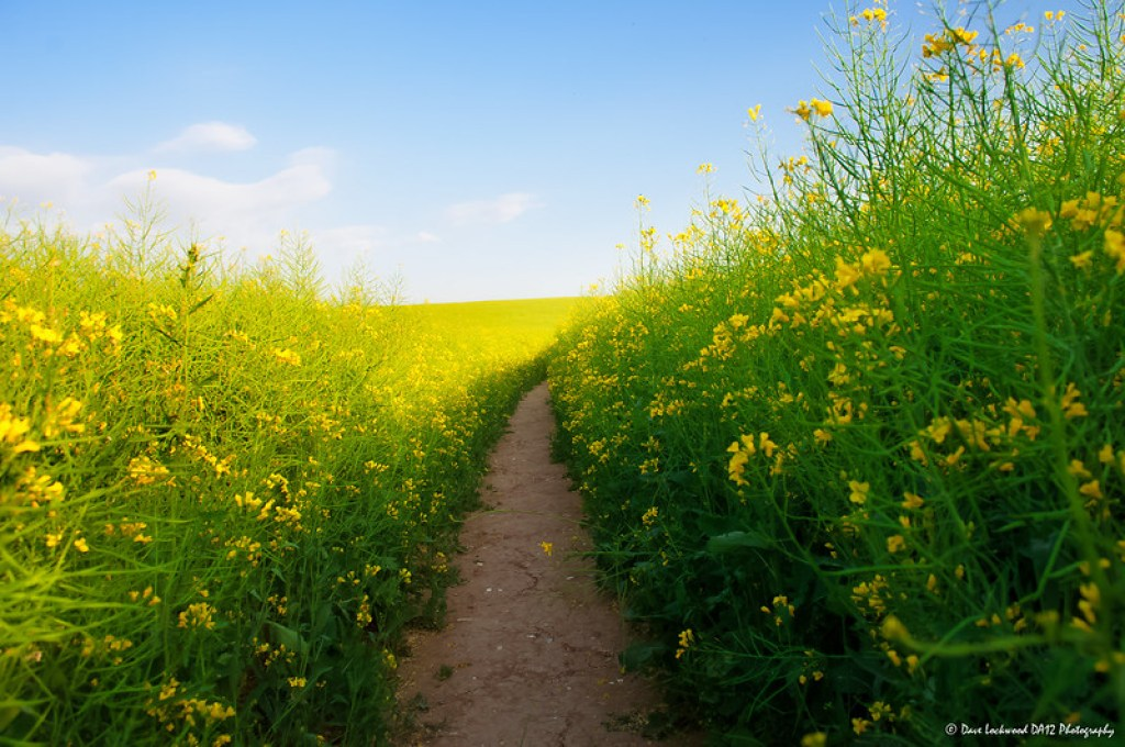 Summer Path (Reprocessed)