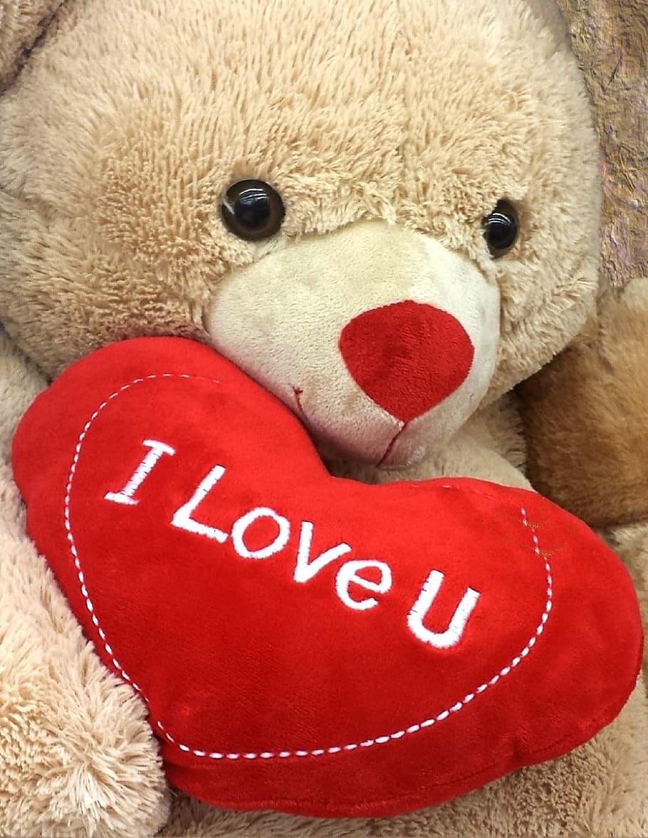 brown bear holding i love u pillow