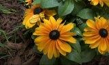 2016 Colorado Garden and Home Show CSU Education Gardens