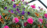 The Flower Bin - Hanging Baskets