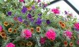 The Flower Bin