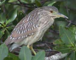 florida birds 1