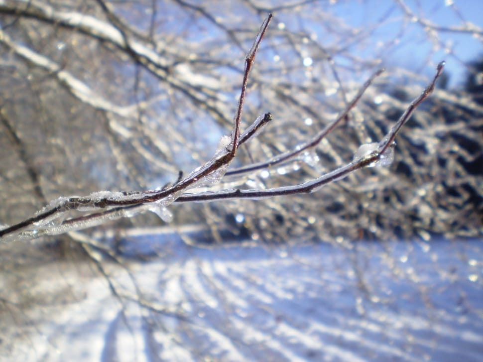 Image result for frozen branches free image