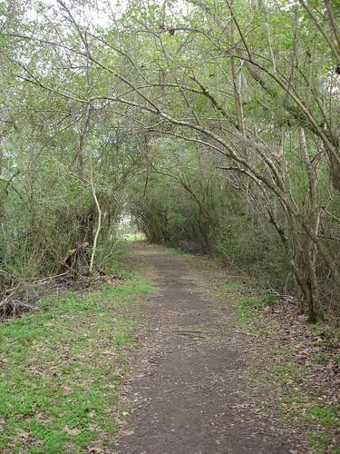 Pathway, Old Cahawba, Alabama