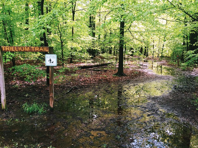 Flooded Trail