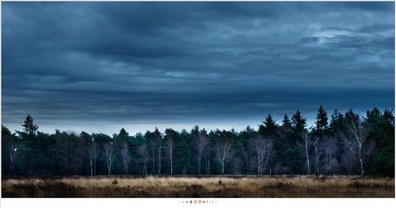 De wolken vliegen over en verdwijnen in Oostelijke richting. Een gat in de bewolking lijkt de berkentakken te veranderen in spinnerag.