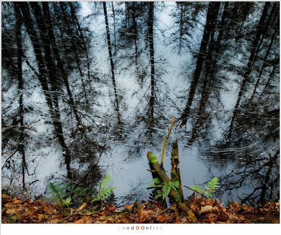 Reflectie van de bomen en lucht in het water. Dit is 24mm brandpunt op een fullframe camera, zonder enige polarisatie waardoor de reflectie zichtbaar blijft