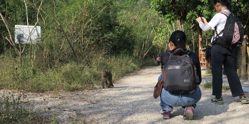 【爬山】2016元旦:高雄柴山,人與猴和平相處之地(11.5ys)